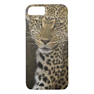 Africa. Tanzania. Leopard in tree at Serengeti iPhone 8/7 Case