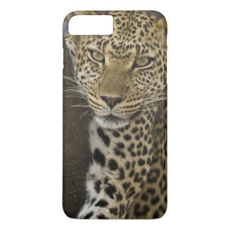 Africa. Tanzania. Leopard in tree at Serengeti iPhone 8 Plus/7 Plus Case