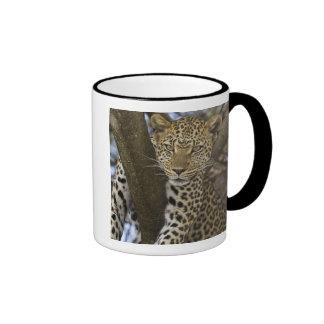 Africa. Tanzania. Leopard in tree at Serengeti Coffee Mugs
