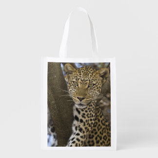 Africa. Tanzania. Leopard in tree at Serengeti Reusable Grocery Bag