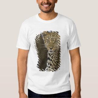 Africa. Tanzania. Leopard in tree at Serengeti T Shirt