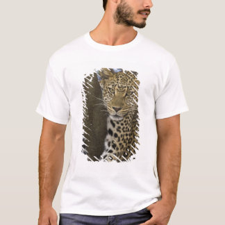 Africa. Tanzania. Leopard in tree at Serengeti T-Shirt