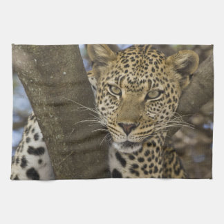 Africa. Tanzania. Leopard in tree at Serengeti Tea Towel