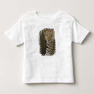 Africa. Tanzania. Leopard in tree at Serengeti Toddler T-Shirt