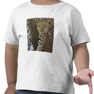 Africa. Tanzania. Leopard in tree at Serengeti Tee Shirt