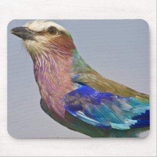 Africa. Tanzania. Lilac-Breasted Roller in Mouse Mat