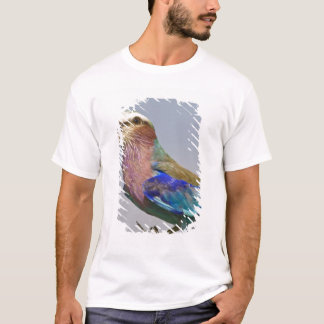 Africa. Tanzania. Lilac-Breasted Roller in T-Shirt