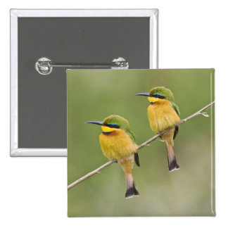 Africa. Tanzania. Little Bee Eaters at Manyara 15 Cm Square Badge