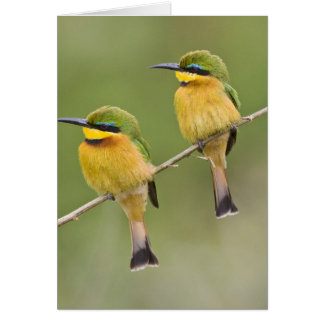 Africa. Tanzania. Little Bee Eaters at Manyara Card