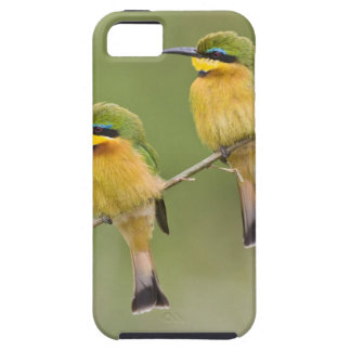 Africa. Tanzania. Little Bee Eaters at Manyara Case For The iPhone 5