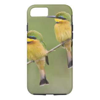 Africa. Tanzania. Little Bee Eaters at Manyara iPhone 8/7 Case
