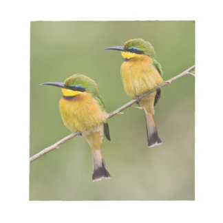 Africa. Tanzania. Little Bee Eaters at Manyara Notepad