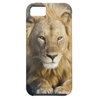 Africa. Tanzania. Male Lion at Ndutu in the iPhone 5 Cases
