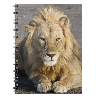Africa. Tanzania. Male Lion at Ndutu in the Notebook