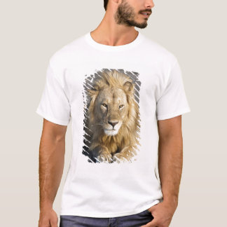 Africa. Tanzania. Male Lion at Ndutu in the T-Shirt