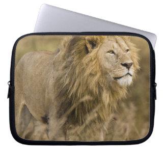 Africa. Tanzania. Male Lion at Ngorongoro Laptop Sleeve