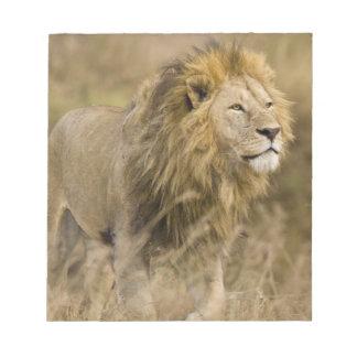 Africa. Tanzania. Male Lion at Ngorongoro Notepad