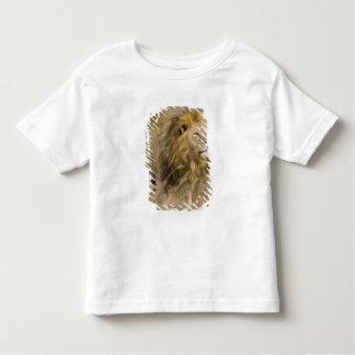 Africa. Tanzania. Male Lion at Ngorongoro Toddler T-Shirt