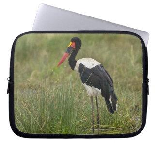 Africa. Tanzania. Male Saddle-billed Stork at Laptop Sleeve