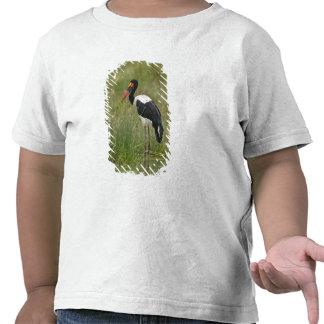 Africa. Tanzania. Male Saddle-billed Stork at Shirts
