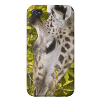 Africa. Tanzania. Masai Giraffe at Tarangire NP. iPhone 4 Cover