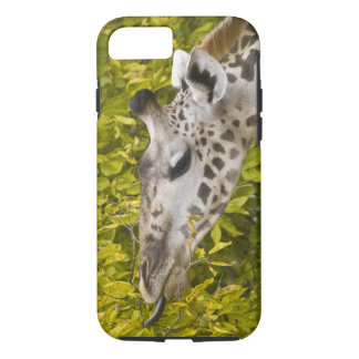 Africa. Tanzania. Masai Giraffe at Tarangire NP. iPhone 7 Case