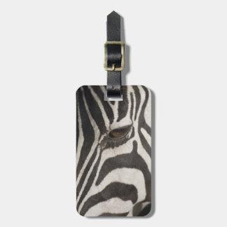 Africa, Tanzania, Ngorongoro Conservation Area Luggage Tag