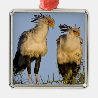 Africa. Tanzania. Secretary Birds at Ndutu in Christmas Ornament