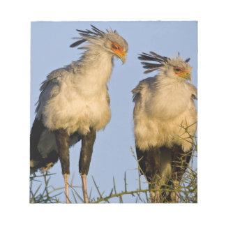 Africa. Tanzania. Secretary Birds at Ndutu in Notepad