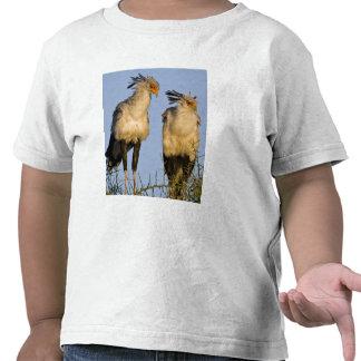 Africa. Tanzania. Secretary Birds at Ndutu in T Shirts