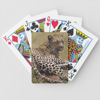 Africa, Tanzania, Serengeti. Leopard Bicycle Playing Cards