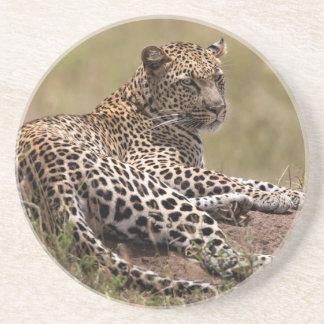 Africa, Tanzania, Serengeti. Leopard Drink Coaster