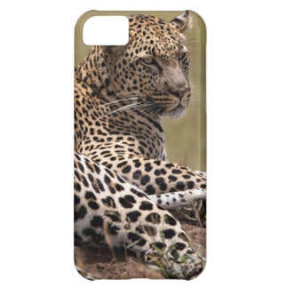 Africa, Tanzania, Serengeti. Leopard iPhone 5C Case
