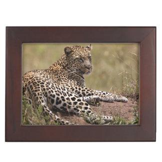Africa, Tanzania, Serengeti. Leopard Keepsake Box