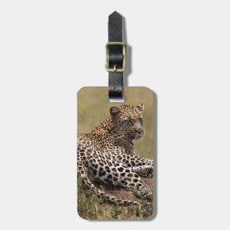 Africa, Tanzania, Serengeti. Leopard Luggage Tag