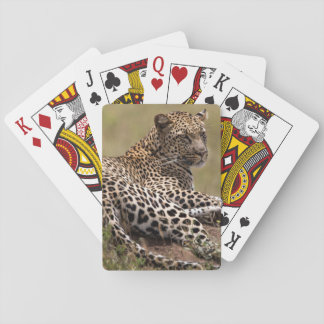 Africa, Tanzania, Serengeti. Leopard Playing Cards