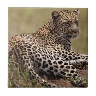 Africa, Tanzania, Serengeti. Leopard Small Square Tile