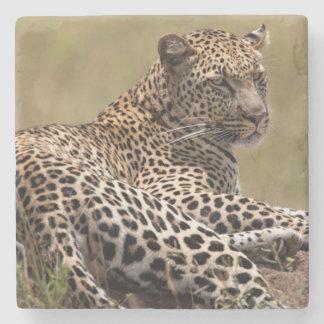 Africa, Tanzania, Serengeti. Leopard Stone Beverage Coaster