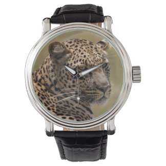 Africa, Tanzania, Serengeti. Leopard Watch