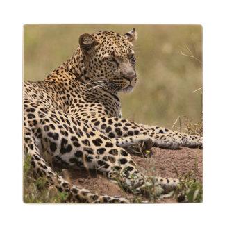 Africa, Tanzania, Serengeti. Leopard Wood Coaster