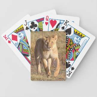 Africa, Tanzania, Serengeti. Lion And Lioness Card Decks