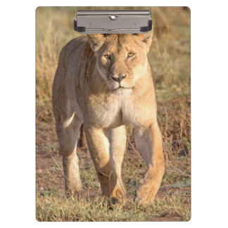 Africa, Tanzania, Serengeti. Lion And Lioness Clipboard