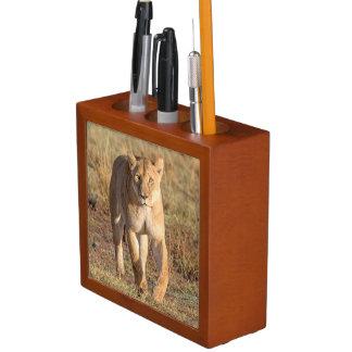 Africa, Tanzania, Serengeti. Lion And Lioness Desk Organiser