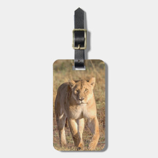 Africa, Tanzania, Serengeti. Lion And Lioness Luggage Tag