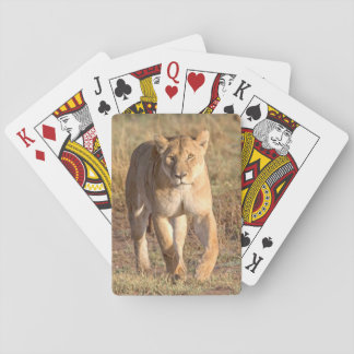 Africa, Tanzania, Serengeti. Lion And Lioness Playing Cards
