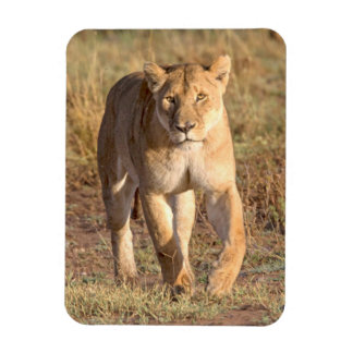Africa, Tanzania, Serengeti. Lion And Lioness Rectangle Magnet