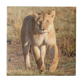 Africa, Tanzania, Serengeti. Lion And Lioness Small Square Tile