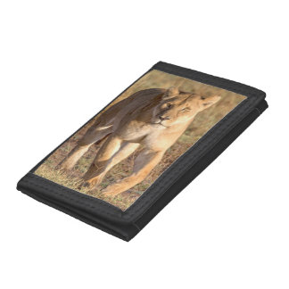 Africa, Tanzania, Serengeti. Lion And Lioness Tri-fold Wallets