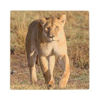 Africa, Tanzania, Serengeti. Lion And Lioness Wood Coaster