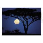 Africa, Tanzania, Tarangire. Acacia tree in Greeting Card